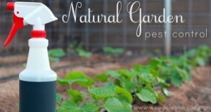 natural-pest-control