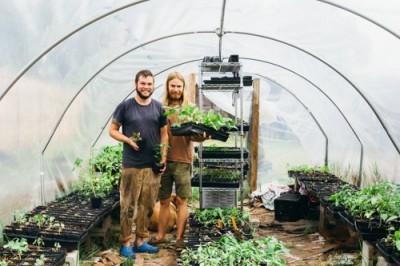 Urban Farmstead