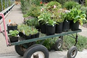 Plant-Sale-cart