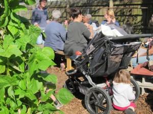 Green Light Edible Teaching Garden