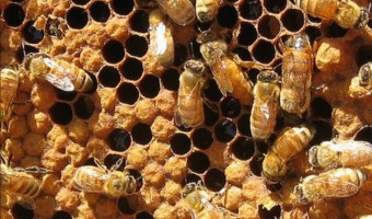 Basics of Beekeeping